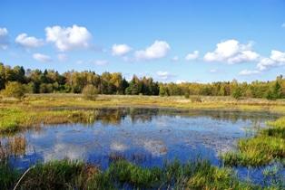 Лесное озеро,лесные озера,фото лесных озер