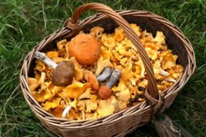 грибы в корзине,мир леса,сбор грибов