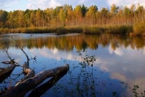 озера в лесу,мир леса,фото леса