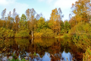 озеро в лесу,лесные озера, фото лесных озер