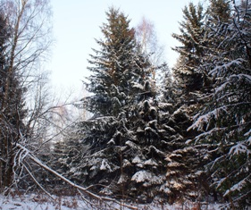 Зима в лесу,мир леса,в лесу