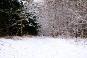 лес зимой,мир леса,в лесу,лес
