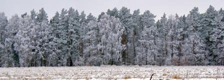 лес зимой,зимний лес,фото зимнего леса
