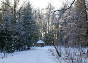 в лесу зимой,зимний лес,фото зимнего леса