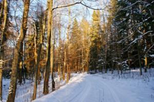 зимний лес,фото зимнего леса,фото леса зимой