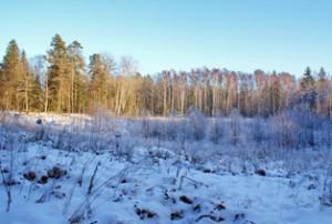 зимний лес,лес зимой,фото зимнего леса, фото леса зимой