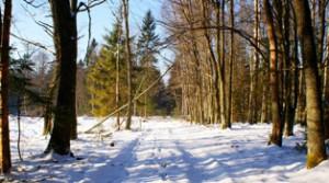 зимний лес,лес зимой,фото зимнего леса,фото леса зимой