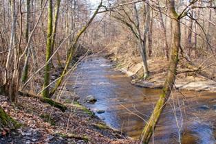 весенний лес,фото весеннего леса,весна в лесу