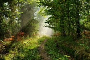 лес летом,фото леса летом