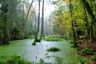 Возникновение болот,болота,лесные болота,фото болот