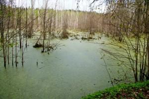 Болото,краснолесье,фото болот,болота