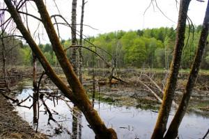 Лесное озеро,краснолесье,лесные озера,фото лесных озер