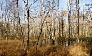 Возникновение болот. лесные болота