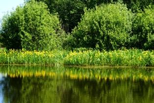 Лесные озера,лесное озеро,фото лесных озер