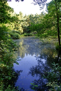 Озеро в лесу,лесные озера,фото лесного озера,лесное озеро