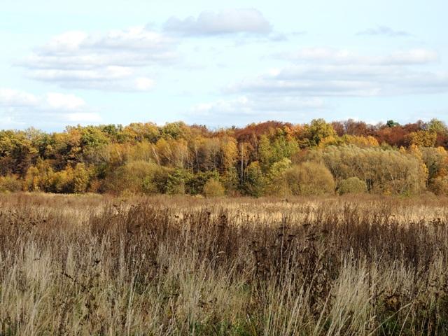 лес осенью,фото осеннего леса