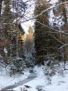зимний лес,лес зимой,фото зимнего леса