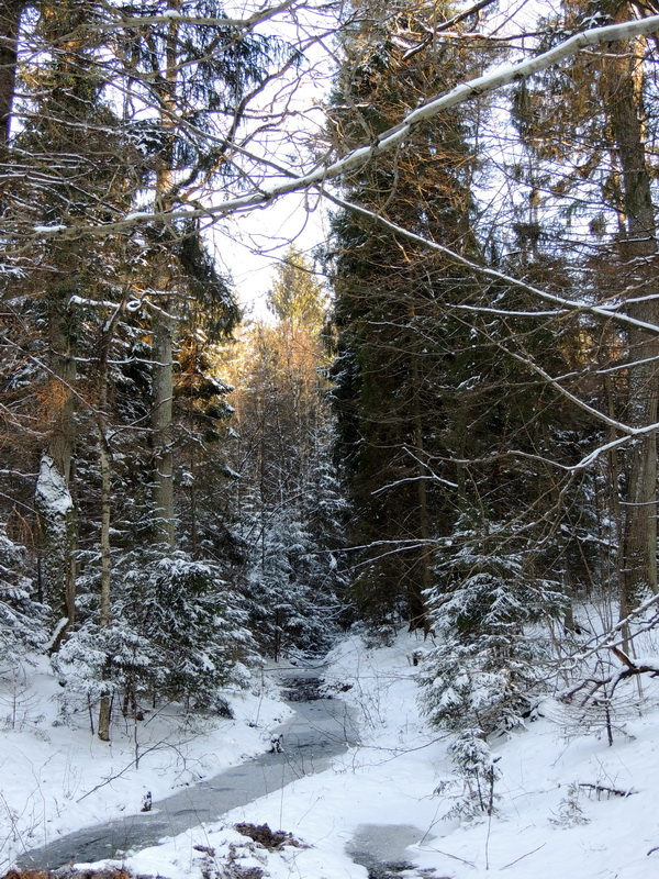зимний лес,лес зимой