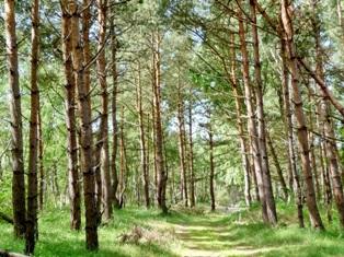 лето в лесу,фото леса летом,лес летом