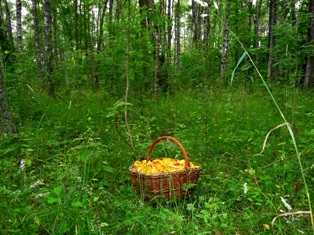 лес летом,фото леса летом,лето в лесу