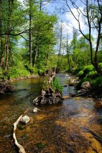 Река Корневка,лесные реки