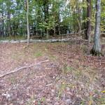 Бугорок в лесу
